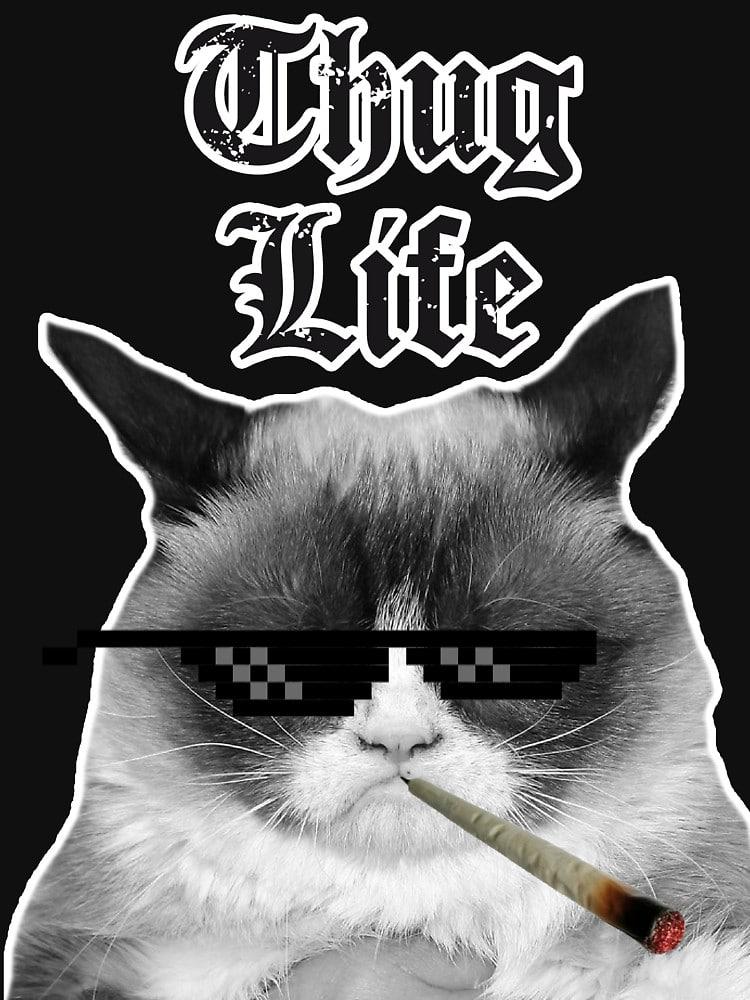 gato thug life